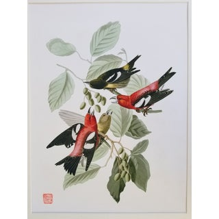 Vintage Giclee Audubon Bird Print Preview