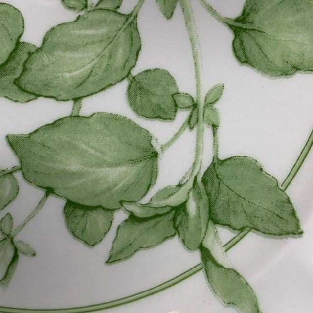 "Green 1960s Richard Ginori ""Fresh Herbs - Oregano"" Salad Plate For Sale - Image 8 of 12"