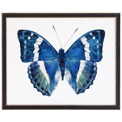 Blue and Green Butterfly in black and silver moulding