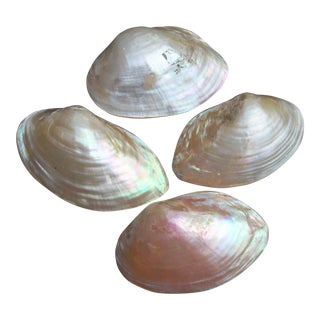 Natural Iridescent Whole Clam Seashells - Set of 4 For Sale
