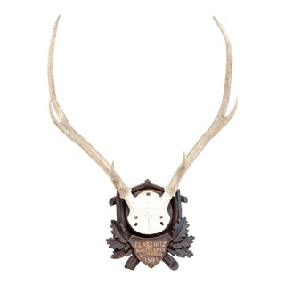 Mounted Stag Antlers Dated 1896 For Sale
