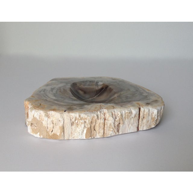 Vinatge Polished Petrified Wood Coved Catchall Dish - Image 7 of 11