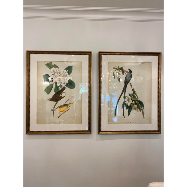 1960s Matted and Framed Bird and Floral Prints - a Pair, Framed For Sale - Image 5 of 5