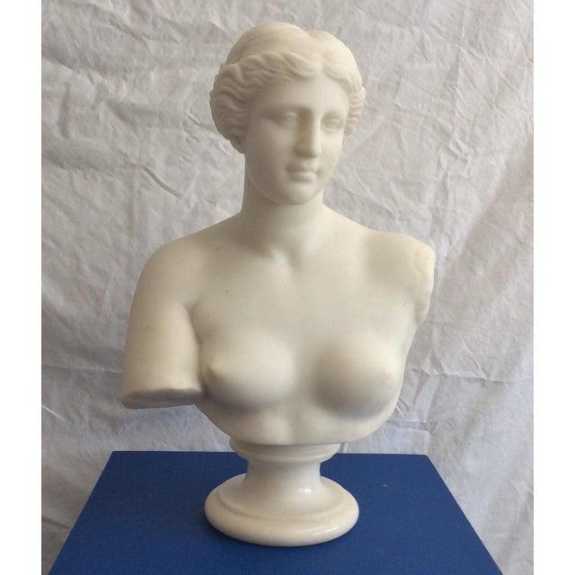 19th Century Venus De Milo Marble Bust For Sale - Image 12 of 12