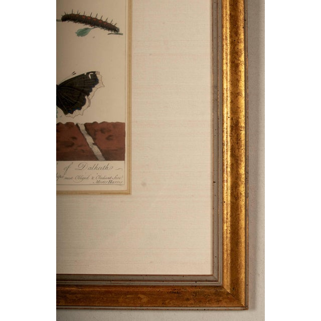 Belle Epoque Plate Xii, Camberwell Beauty, Large Magpie Moth, Moses Harris, 1785 For Sale - Image 3 of 7