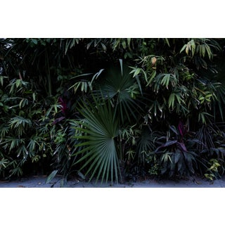 Purple Green Palms Original Fine Art Photo Print For Sale