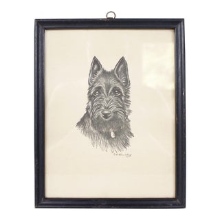 Vintage Scottish Terrier Wall Art Wall Hanging Scottie Dog Print Drawing For Sale
