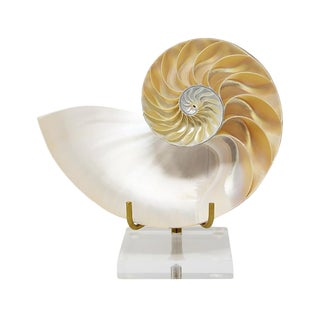 AURA LONDON Half Nautilus Shell For Sale