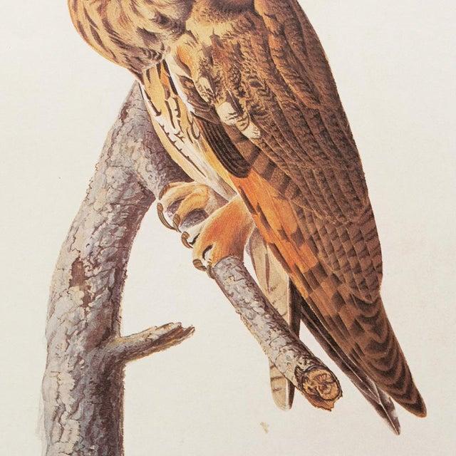 1960s Stunning Long-Eared Owl by John J. Audubon, Vintage Cottage Print For Sale - Image 5 of 10
