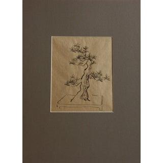 Bonsai Tree Drawing