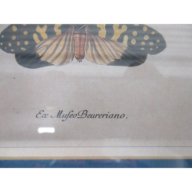 Wood Vintage Print Framed in Wedgewood Blue Color Wood Frame With Glass Cover For Sale - Image 7 of 10