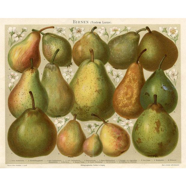 Late 1800s Pears Lithograph Print For Sale