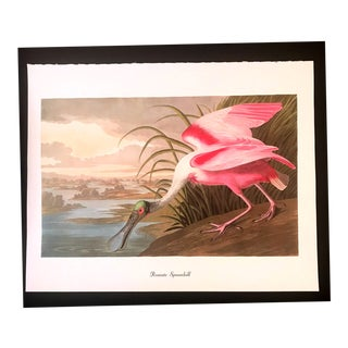 1970s Vintage John James Audubon Spoonbill Bird & Botanical Print For Sale