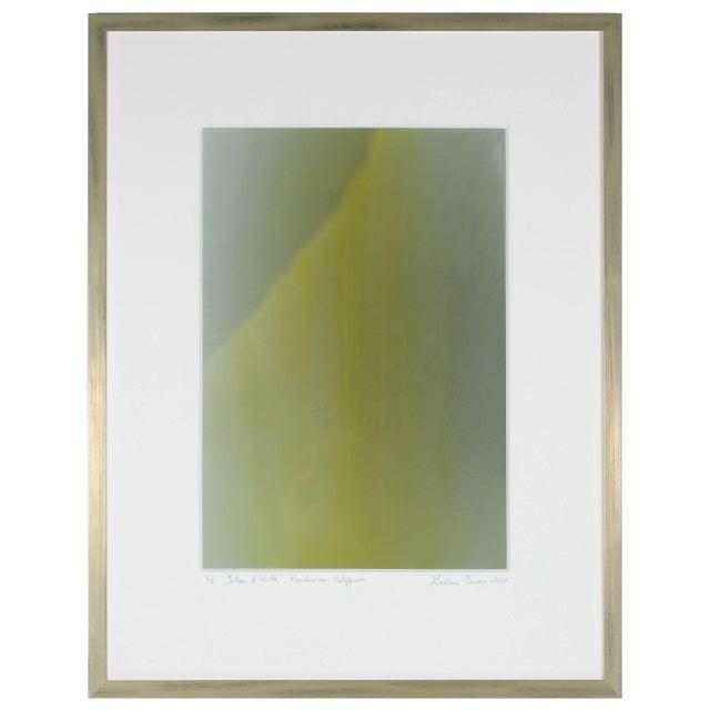 """Gaetan Caron Gaétan Caron """"Yellow & White"""" Abstract Floral Framed Photograph, Mendocino, Ca, 2014 2014 For Sale - Image 4 of 6"""