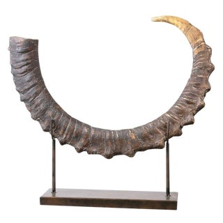 Horn on Museum Display Stand For Sale