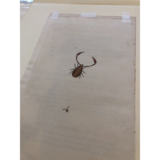 Early 19th Century 19th Century Insect Hand Colored Print For Sale - Image 5 of 7