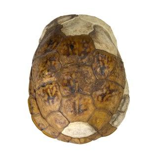 Vintage Turtle Shell