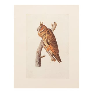 1960s Vintage Long-Eared Owl Print by John James Audubon For Sale
