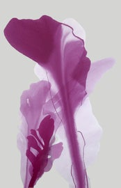 Image of Magenta Paintings