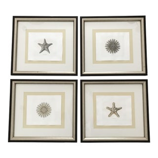 Coastal/Water Framed Shadow Catchers Art Prints - Set of 4 For Sale