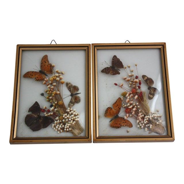 Framed Butterfly Specimens - A Pair - Image 1 of 4