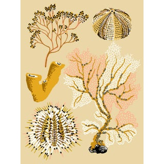 Ochre Seaweed Giclee Print by Sarah Gordon For Sale