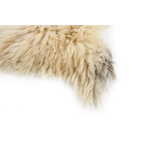 """Children's Contemporary Hand-Tanned Sheepskin Pelt - 2'2""""x3'6"""" For Sale - Image 3 of 6"""