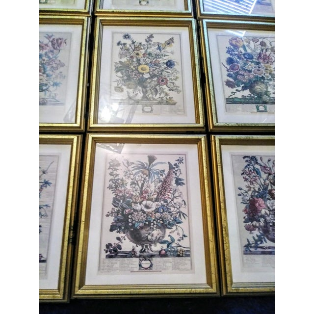 Set of 9 Vintage Botanical Prints in Gold Antique Frames For Sale In West Palm - Image 6 of 8