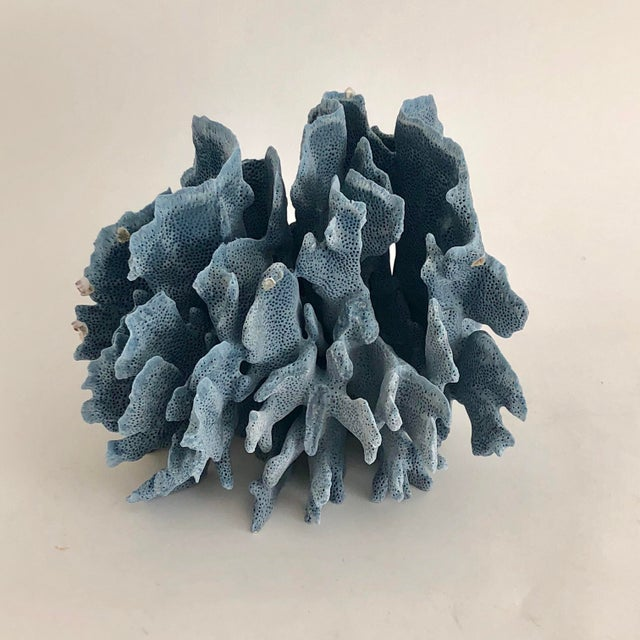Coral Natural Blue Coral Fragment For Sale - Image 7 of 7