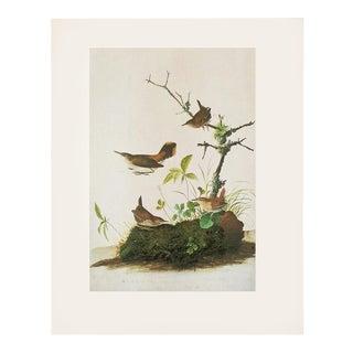 "1966 Audubon ""Winter Wren and Rock Wren"", Vintage Cottage Print For Sale"