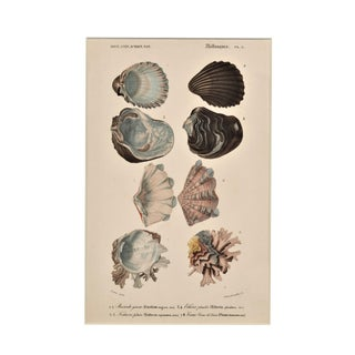 1849 Matted Hand-Colored Seashell Engraving Print For Sale