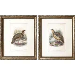 Antique 19th C. Ornithological Chromolithograph Prints Game Birds For Sale