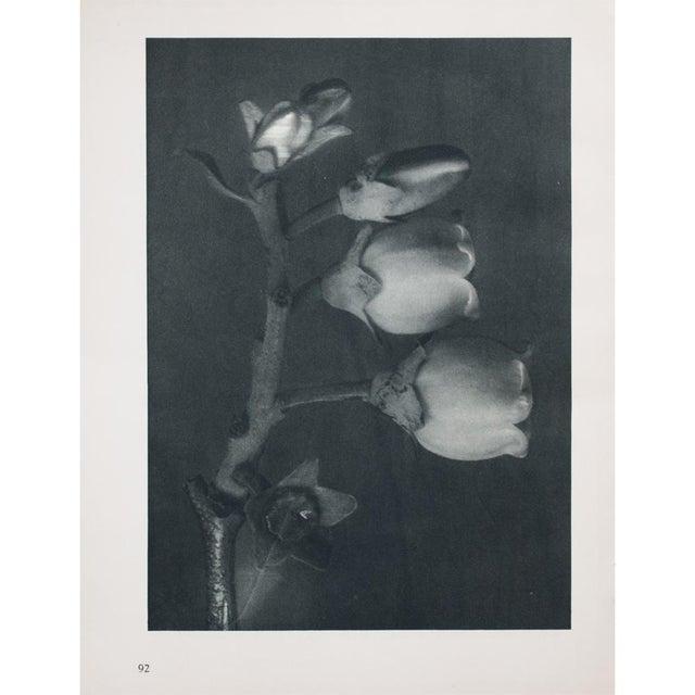 Karl Blossfeldt Double Sided Photogravure N91-92 For Sale - Image 4 of 7