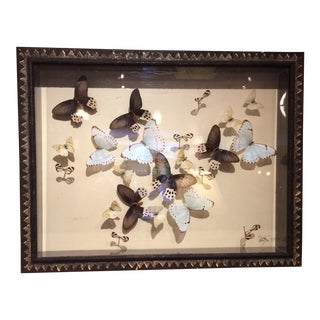 Shadow Box Framed Butterflies