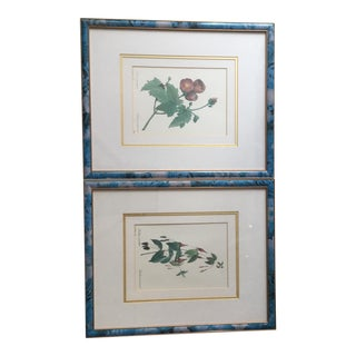 P. J. Redoute Botanical Lithographs - A Pair For Sale