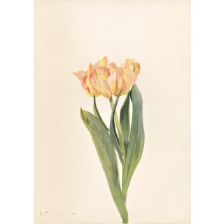 1939 French Botanical-Tulip For Sale