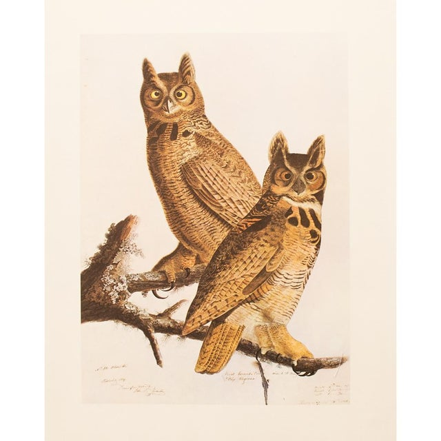 Brown 1960s Cottage Lithograph of Great Horned Owl by Audubon For Sale - Image 8 of 9