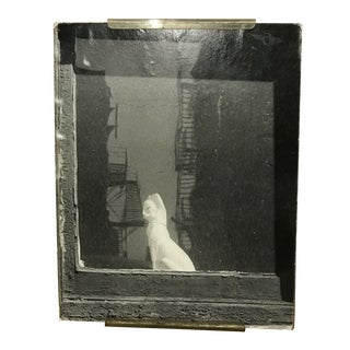 """1970's """"Porcelain Cat in the Window"""" Black and White Photograph For Sale"""