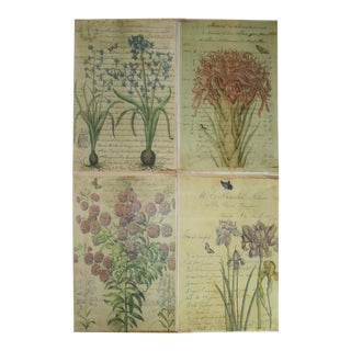 Antique Botanical Prints - Set of 4