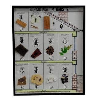 A Great Vintage School Teaching Display Of Household Pests (2) For Sale