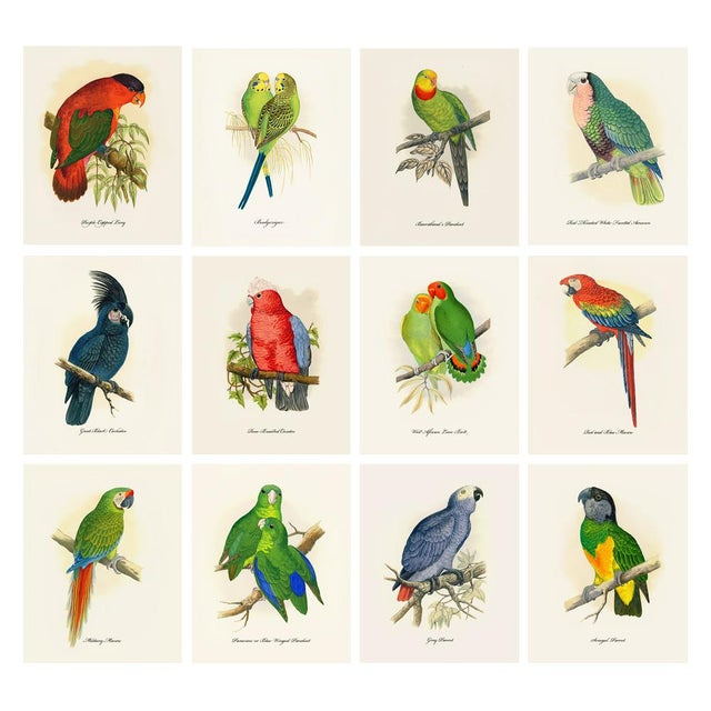1884 Alexander Francis Lydon, Parrot Reproduction - Set of 12, N2 For Sale - Image 12 of 13
