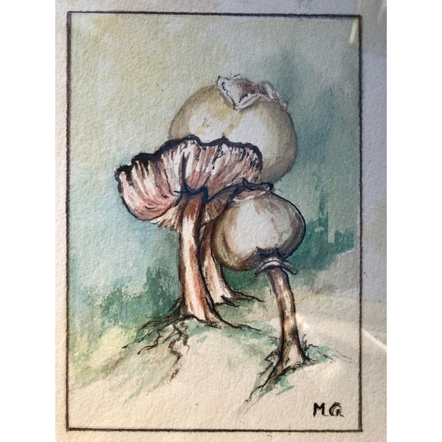 Framed Original Mushroom Watercolor Paintings - a Pair For Sale - Image 4 of 7