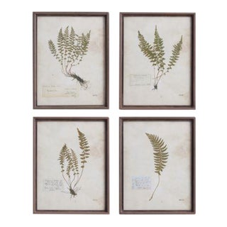 Frond Prints from Kenneth Ludwig Chicago - Set of 4, Framed For Sale