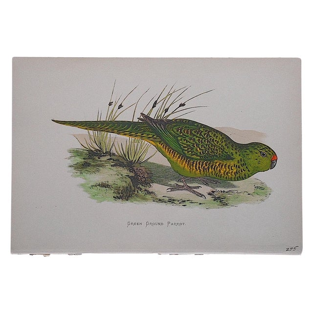 Antique Bird Lithograph For Sale