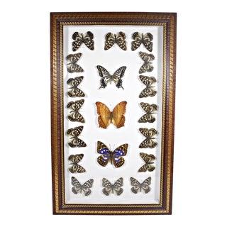 Vintage Mid-Century Framed Real Butterfly Specimens For Sale