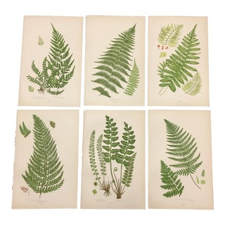 Antique Fern Botanical Book Prints - Set of 6