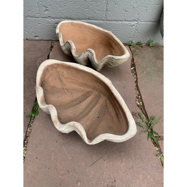 Aged Terra Cotta Conch Shells by Campo De Fiori - a Pair For Sale In Denver - Image 6 of 13