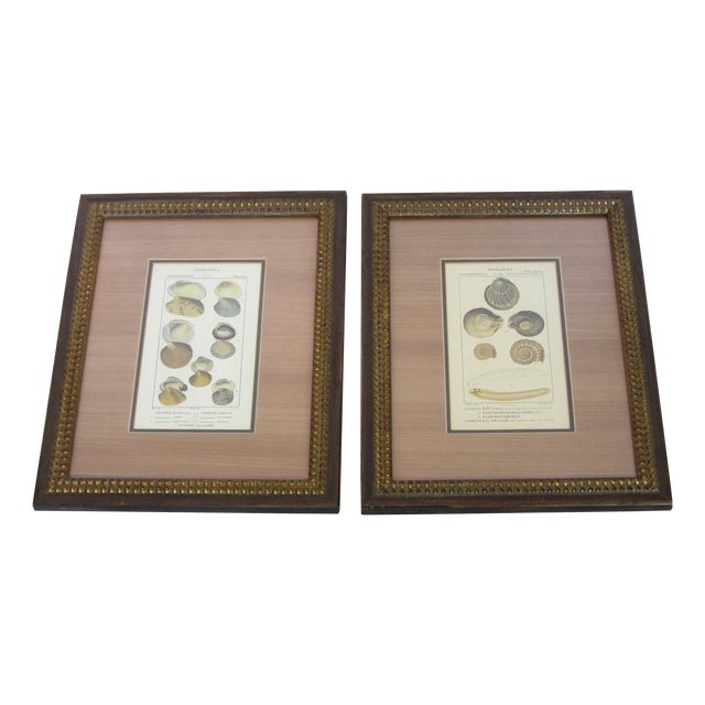 Pair of Vintage Latin Conch Shell Botanicals - Image 1 of 9