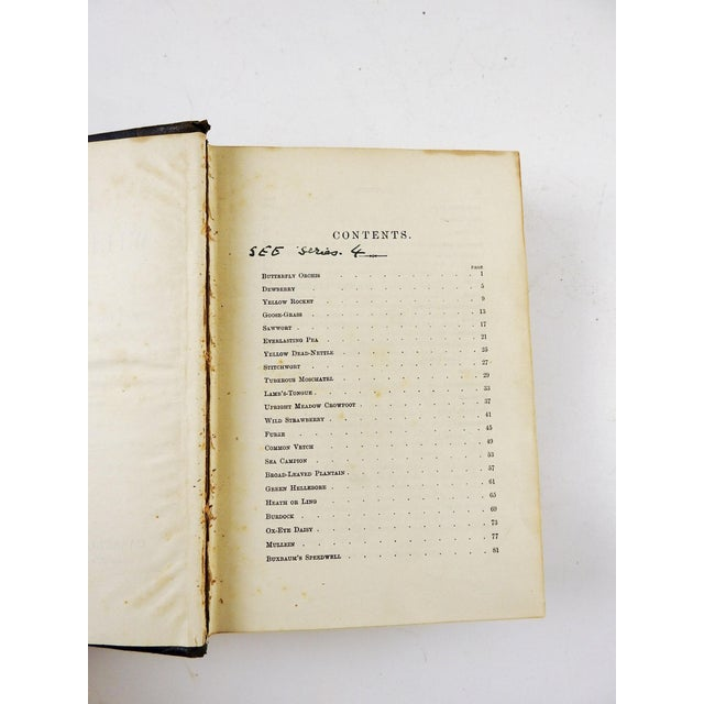 Familiar Wild Flowers 1902 - 2 Volumes For Sale In San Antonio - Image 6 of 11