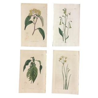 Set of 19th Century Hand-Colored Botanical Engravings
